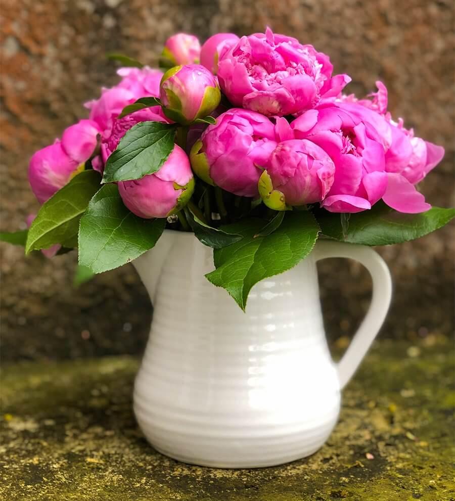 Pink Flowers in a Flower Pot